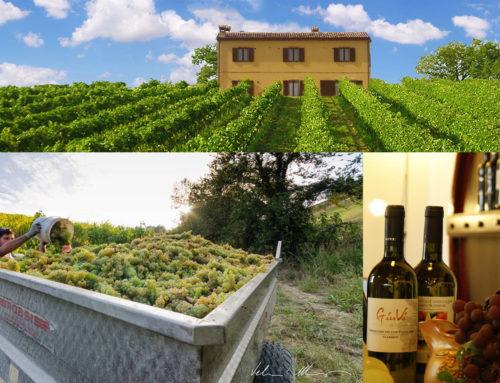 Azienda vinicola Saputi, passione di famiglia dal 1962
