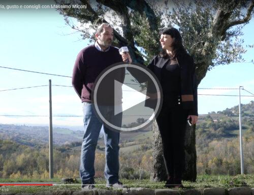 Olio: viaggio tra storia, gusto e consigli con Massimo Miconi